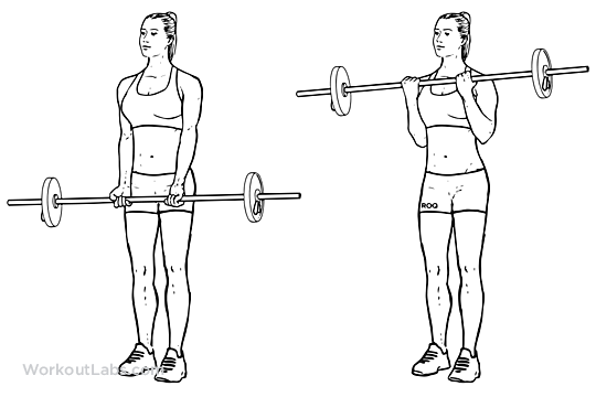 Barbell Curl / Standing Biceps Curl
