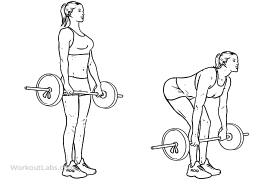 Barbell Deadlift Illustrated Exercise Guide Workoutlabs