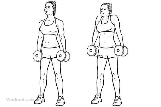 Image result for shrug exercises