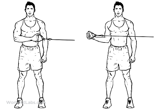 External Cable Shoulder Rotation Workoutlabs Exercise Guide