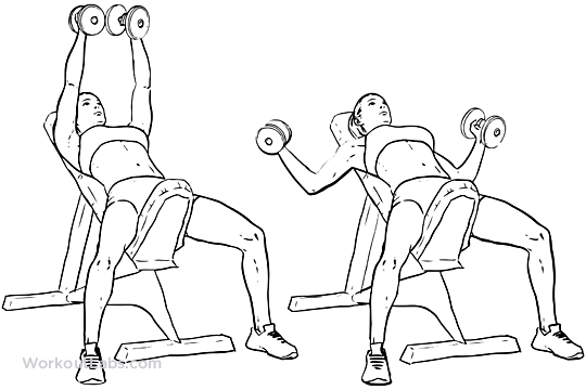 Incline Bench Dumbbell Flyes – WorkoutLabs Exercise Guide
