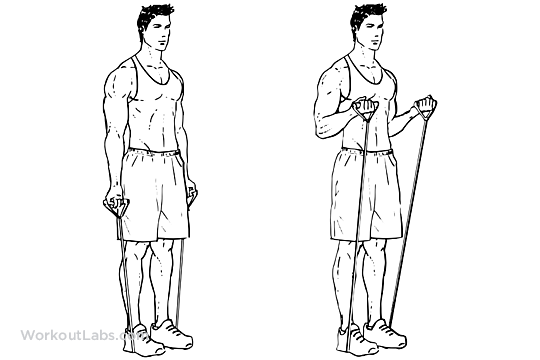 Resistance Band Bicep Curls Workoutlabs Exercise Guide