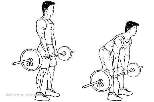 Romanian Deadlift   Illustrated Exercise guide  WorkoutLabs