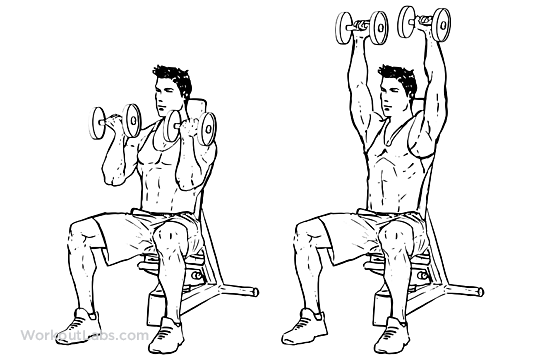 Seated Arnold Dumbbell Press Workoutlabs