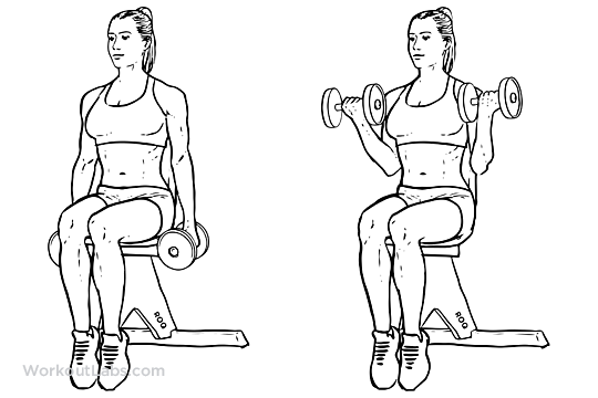 Seated Dumbbell Bicep Curls | WorkoutLabs