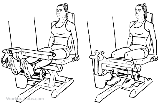 seated leg curls