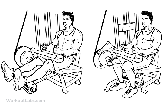 seated leg curls workoutlabs