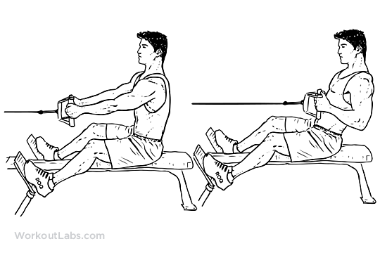Seated Low Cable Row Illustrated Exercise Guide