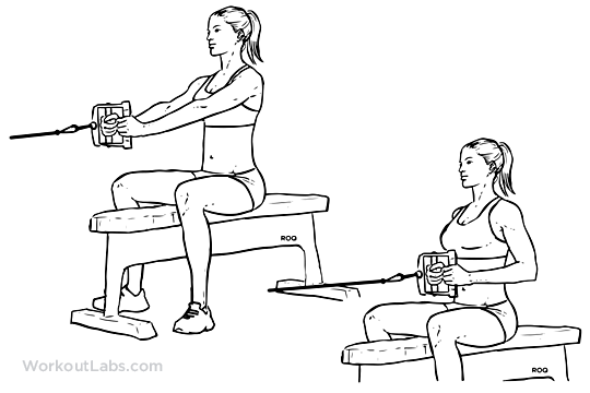 Seated / Low Cable Row