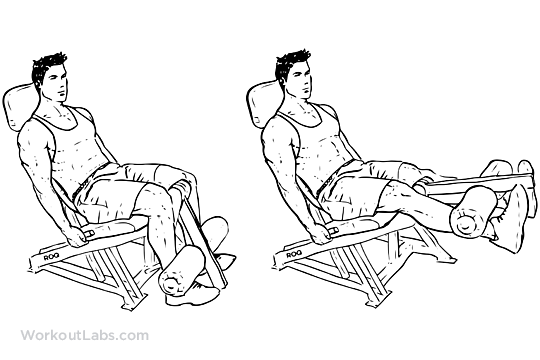seated machine leg extensions workoutlabs