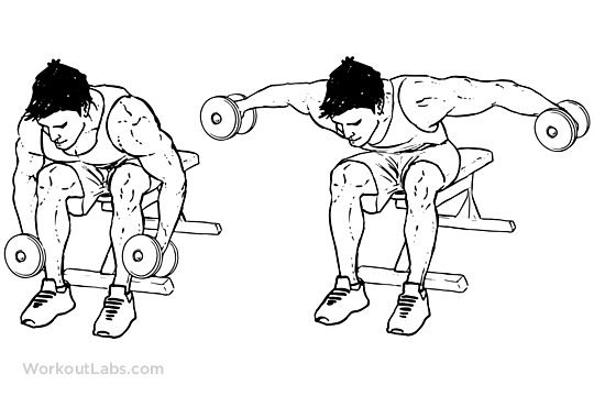Seated / Bent Over Rear Delt Raise | Illustrated Exercise ...