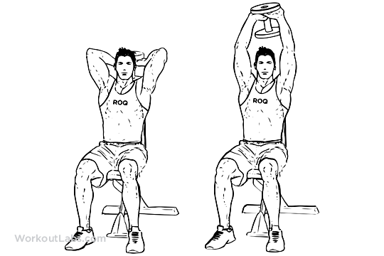 seated tricep press    overhead extensions  u2013 workoutlabs exercise guide