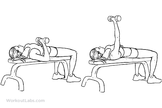 Single Arm Chest Press Workoutlabs Exercise Guide