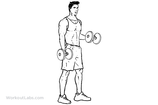 static bicep curls  u2013 workoutlabs exercise guide
