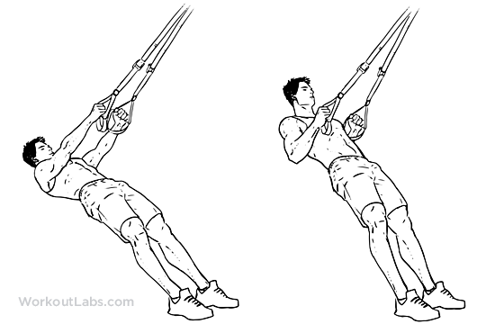 photograph regarding Printable Trx Workouts identified as TRX Suspension Strap Row Illustrated Fitness lead