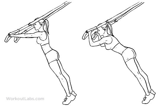 graphic relating to Trx Workout Plan Printable known as TRX Suspension Straps Tricep Extension Illustrated