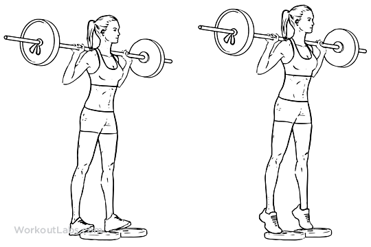Standing Barbell Calf Raise Illustrated Exercise Guide
